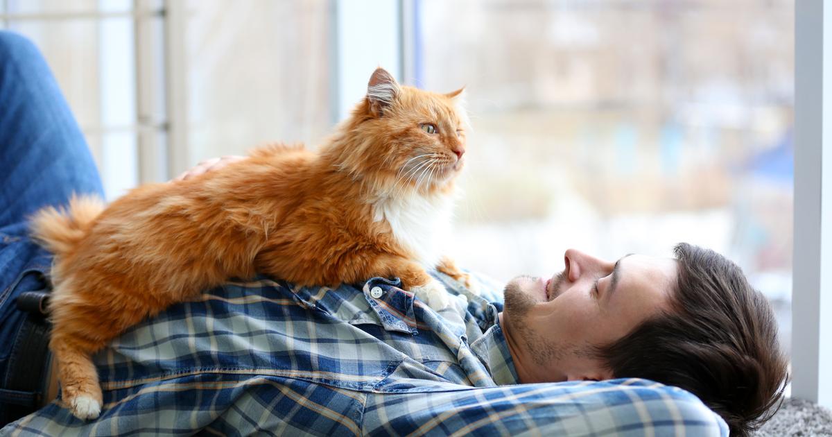 Hombre tumbado con un gato naranja tumbado en su pecho